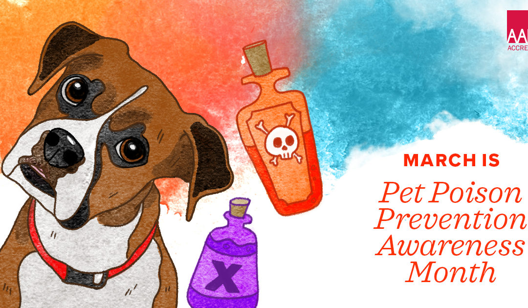 Pet Poison Awareness Month